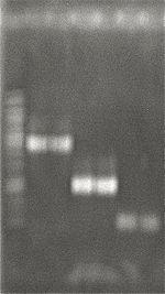 PCR14Sep2010.JPG