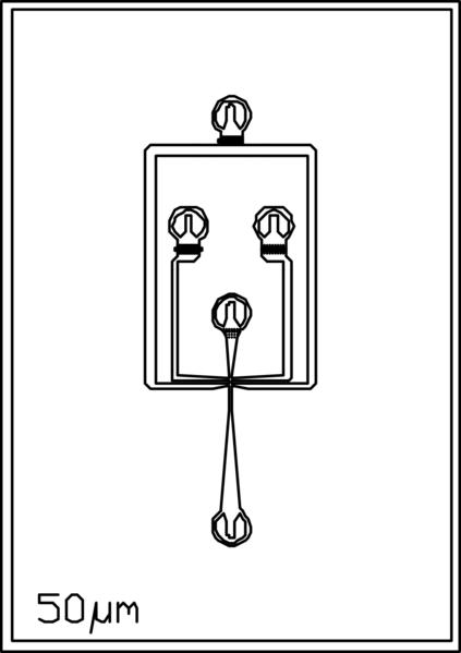 File:50um 4 inlets.png