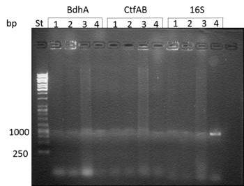 Agarose electrophoresis: 1-broth, 2-100x diluted broth, 3-DNA, 4-100x diluted DNA