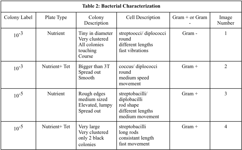 File:Bacterial Characterization.png
