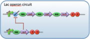 The parts necessary for an example inducible promoter to work.[10]