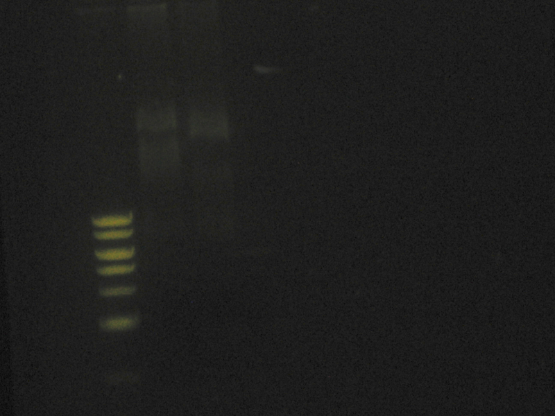 File:Pbs-ligations-8 28 09.png