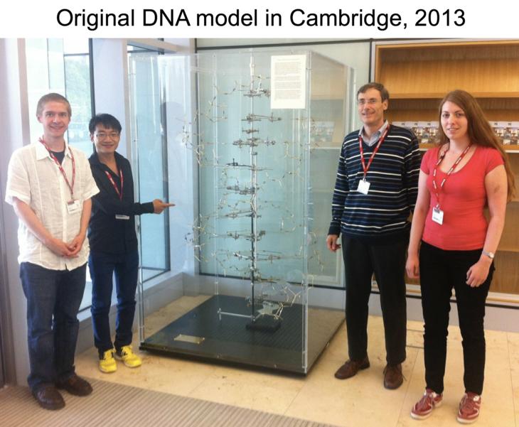 2013 DNA model.png