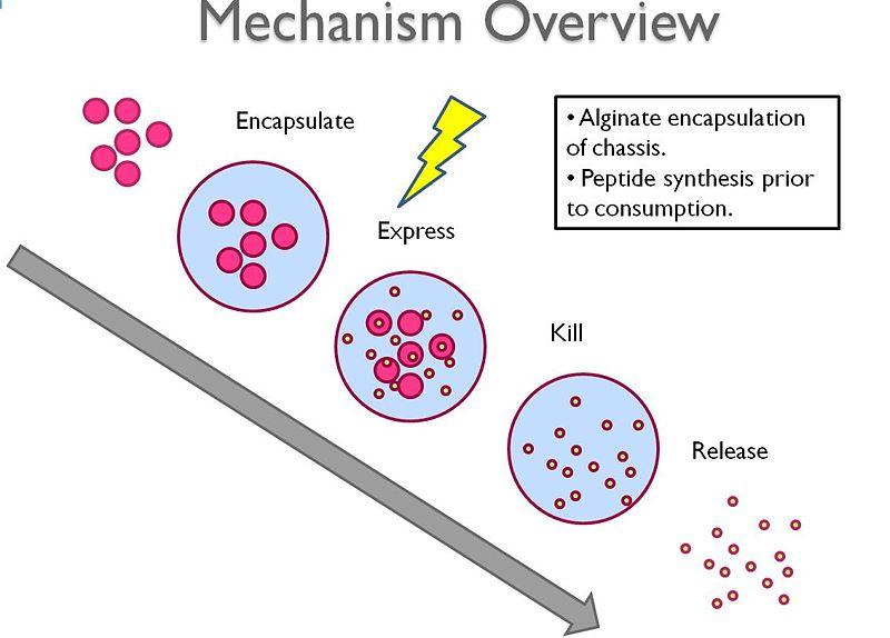 File:Mechanismoverview.jpg