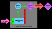 Figure 3e. Gene-expression SENDER gate.  Click to enlarge.  A standard PoPS input signal enters from the left driving expression of an enzyme that produces a molecule that can travel between cells.  The molecule defines a cell-cell communication signal specific to the SENDER device.