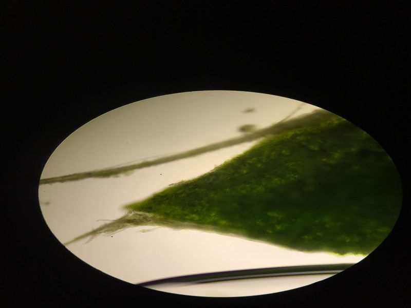 File:Image5369JPG. Bio210 Figure 3a