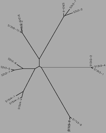 Figure 34:The midvisit tree for the rapid and nonprogressors, generated by CLUSTALW.