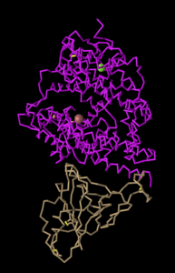 C alpha trace Kam tag .png