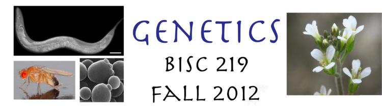 Genetics 219 Banner 2012.png