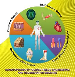 Nanotopography-guided tissue engineering and regenerative medicine (Advanced Drug Delivery Reviews 65, 536-558 [2013])