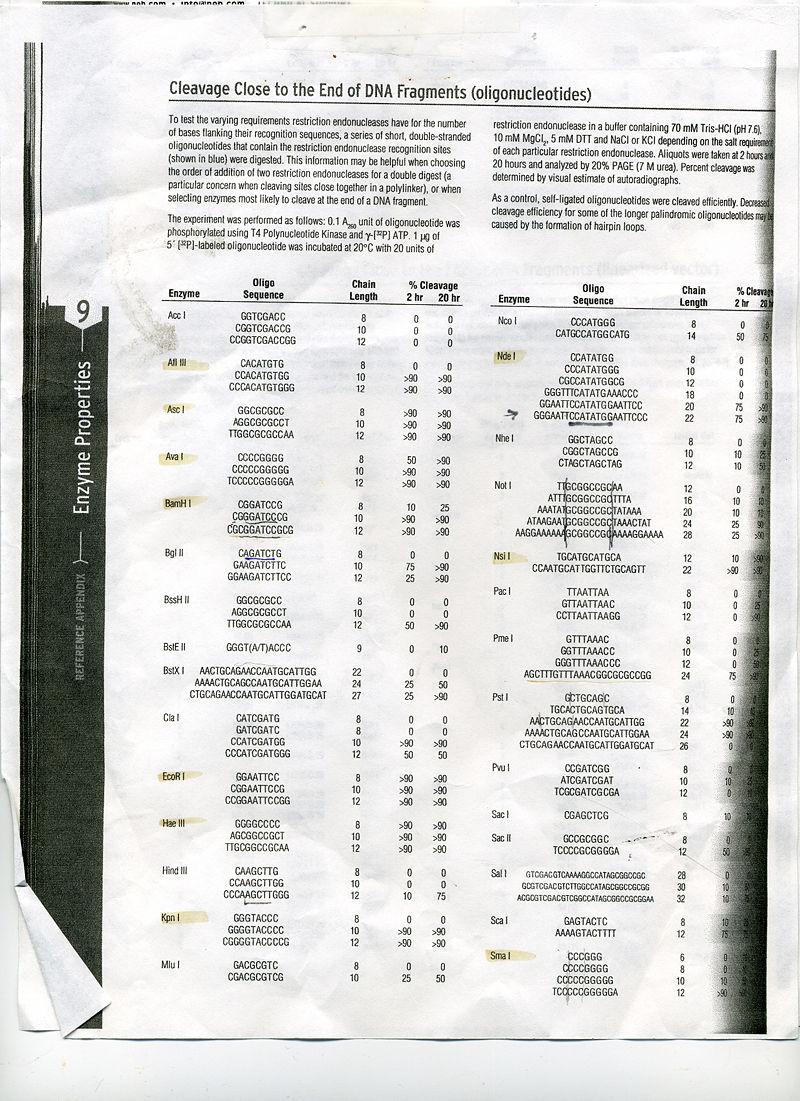 NEB sheet 1001.jpg