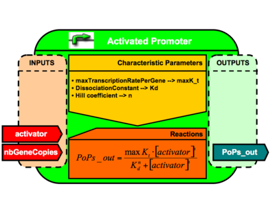 Activated Promoter Brick Architecture