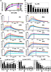 Kinetic Characterization of Atl1 Affinity for ODNs