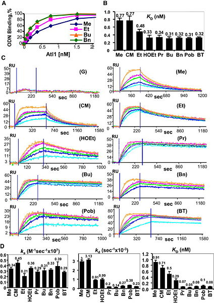 File:Kinetic Characterization of Atl1 Affinity for ODNs.jpg