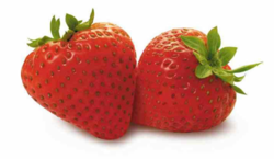 Strawberries iGEM 2010.png