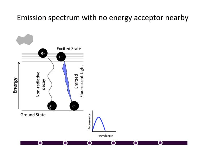 File:AU BDL Description Fluorescence4.png