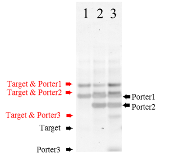 fig.2 stained samples