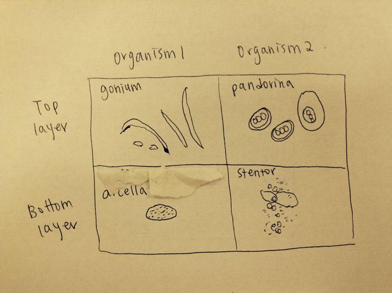 File:Chang Microorganisms.jpeg