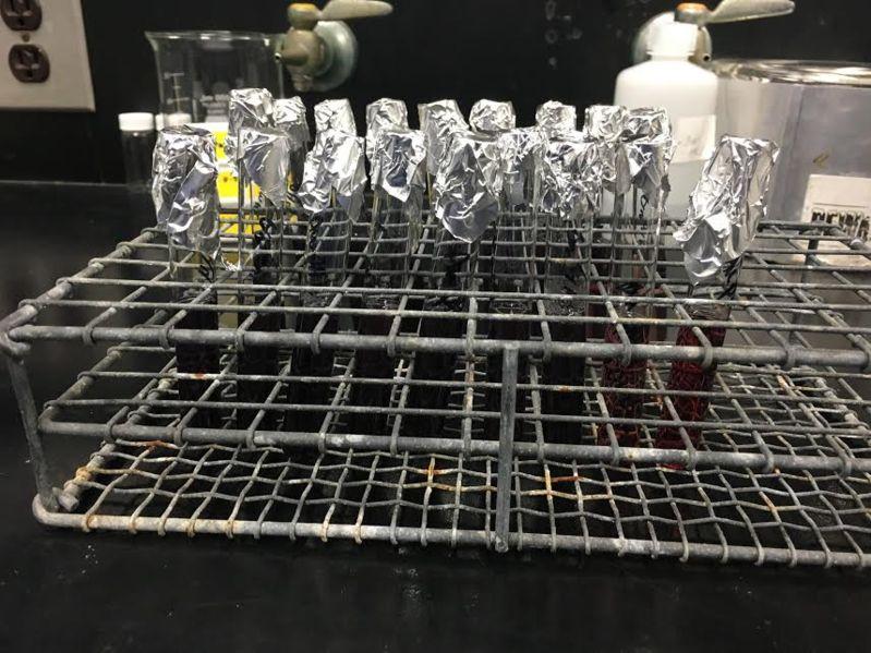 File:Myoglobin fructose 0.625mM.jpg