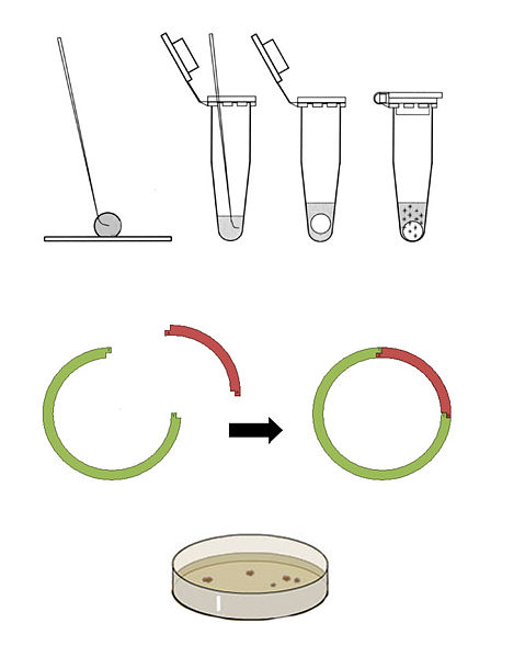 File:Procedure 3.jpg