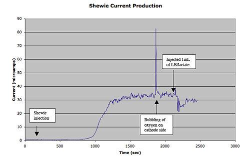 ShewieCurrentProduction2.jpg