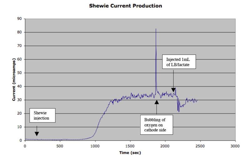 File:ShewieCurrentProduction2.jpg