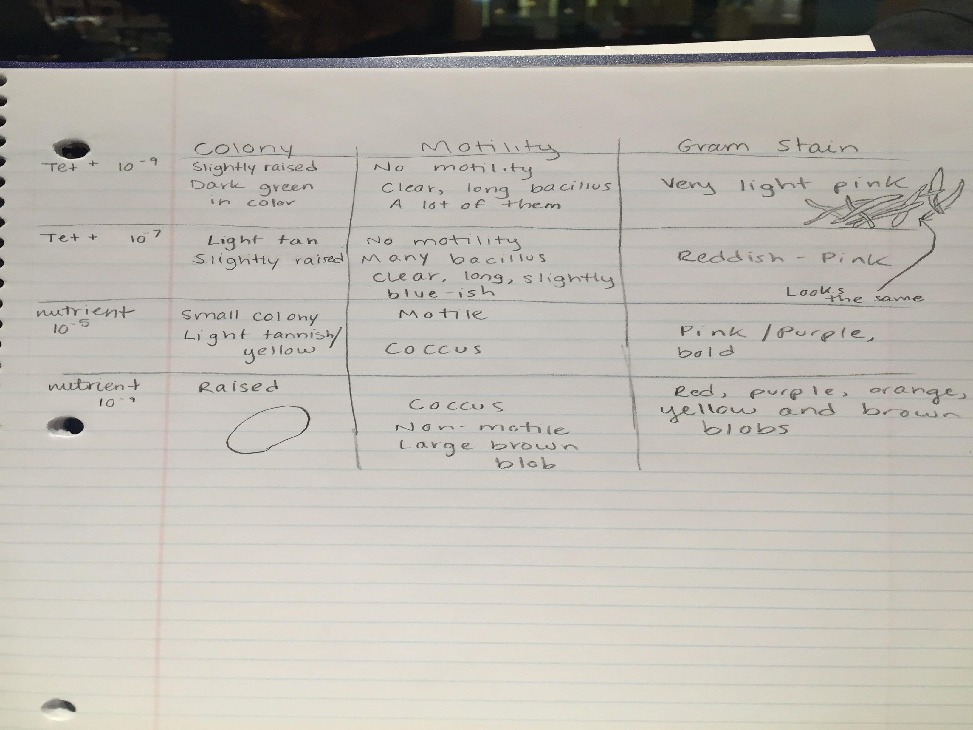 Table 2, colony, motility, gram stain.JPG