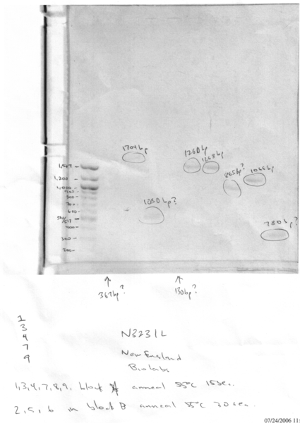 File:2006 07 24 AlphaSectionsPCRTrial2Analysis.jpg