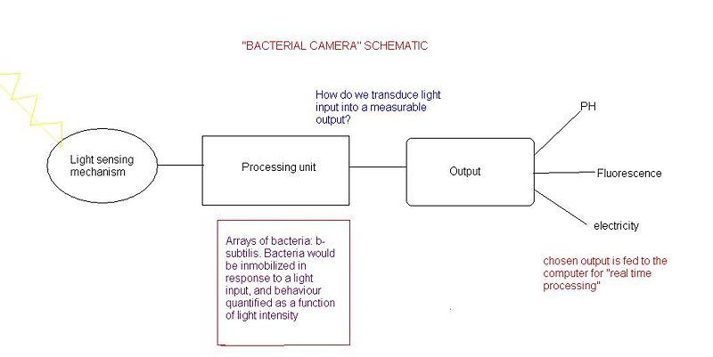 File:Drawingbacterialcamera.jpg