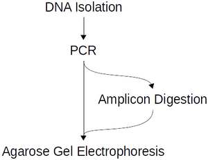 Overview of the workflow for the genotype testing experiment