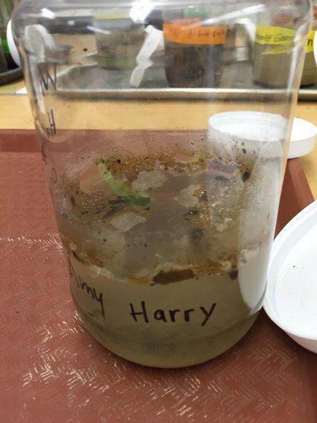 File:Harry Lab 2 Pic 1.JPG