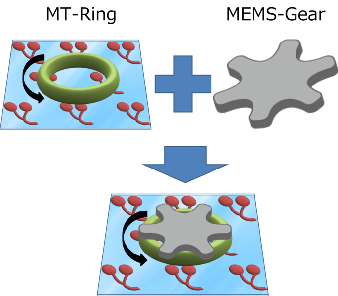 File:MT ring + gear.png