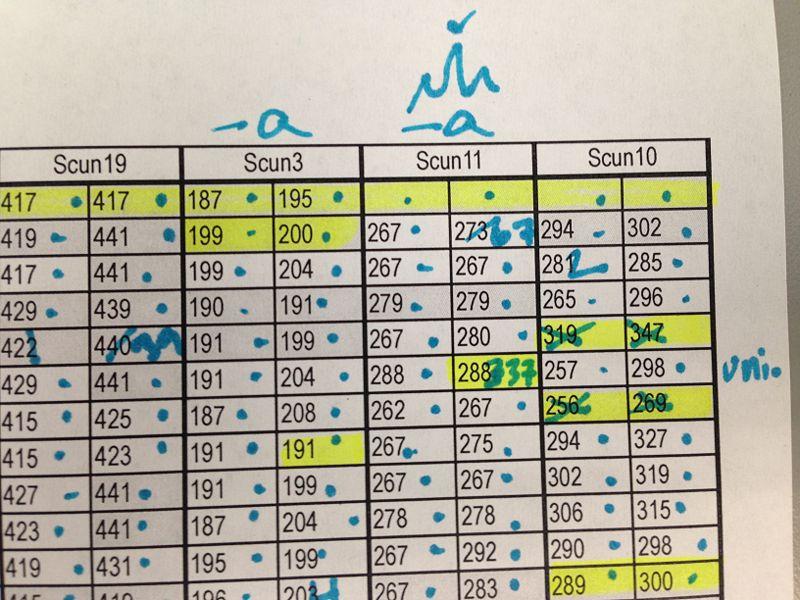 File:Scoring-ScoreSheetTara.jpg