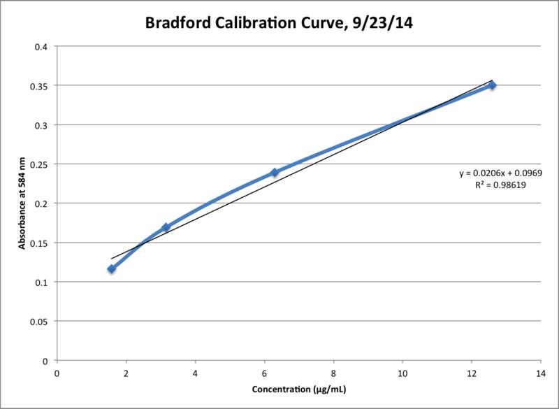 File:Bradford Calibration Graph.png