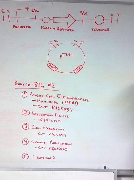 File:BAB2-2 Agenda.jpg