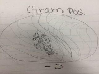 File:Gram-5.JPG