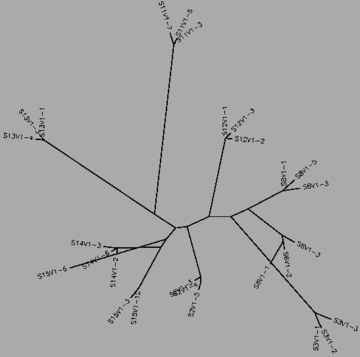 Figure 19:The tree for the all three progressor groups for visit 1, generated by CLUSTALW.