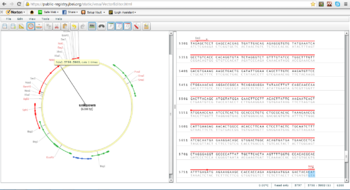Vector Editor representation of an annotated plasmid sequence
