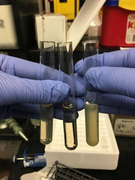 File:AgNO3 0mMfructose pH4-6.jpg