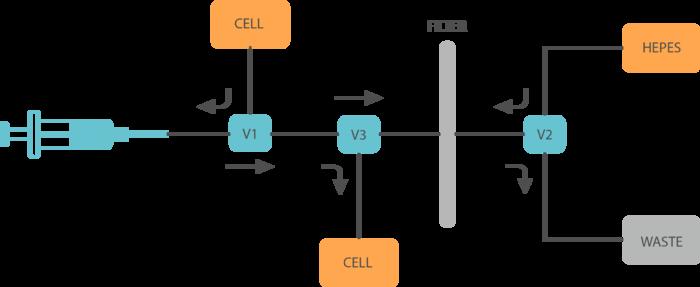 CAFE diagram2.png
