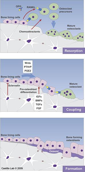 File:Castillo Lab Remodeling Image.jpg