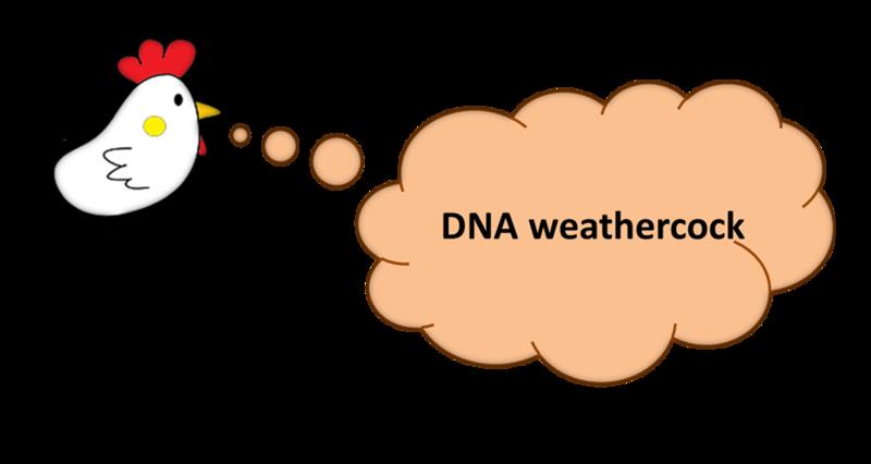 File:DNAweathercock.png