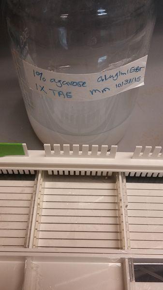 File:Gel Container.jpg