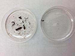 Invertebrates krb.jpeg