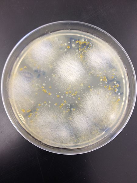 File:Fungi.jpg