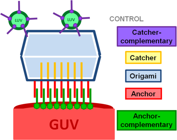 File:LUVs with catcher complementary strands as target speciesCONTROL.png