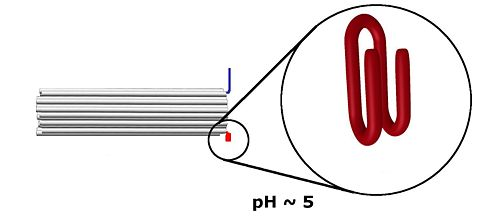 At low pH the red strands form a quadruplex.
