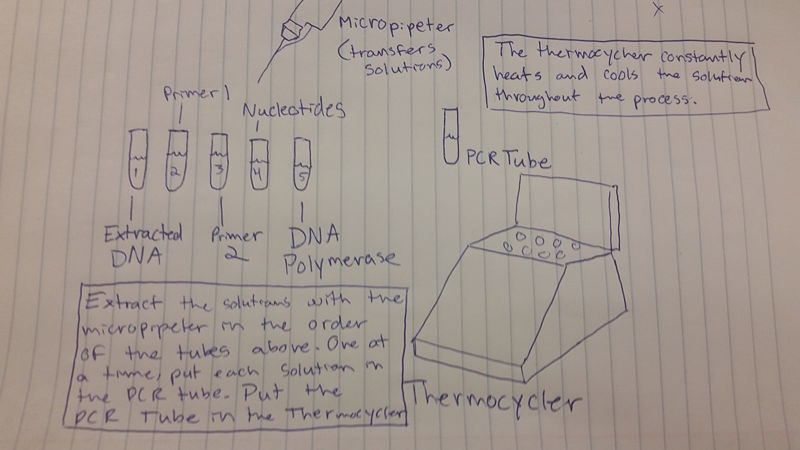 File:PCR PIC.jpg