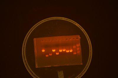 Analytical gel.jpg