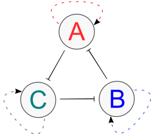 BIOMOD-2012-UTokyo-UTKomaba-trioscillate system model 1.png
